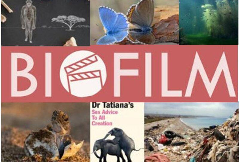 Biofilm Bild