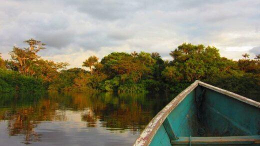Der Regenwald in Ecuador. Foto: Friederike Oertel